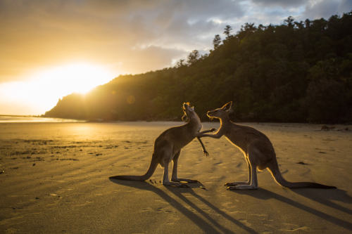 Roos on bicycle tour